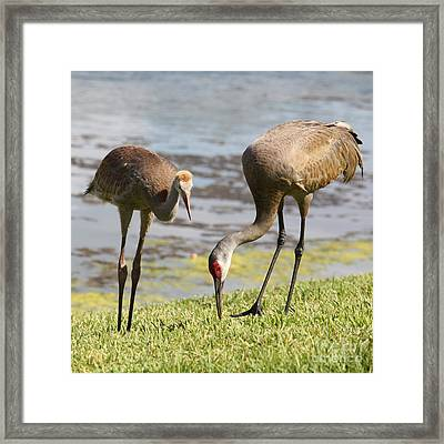 A Mother's Lesson Framed Print by Carol Groenen
