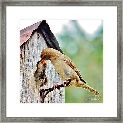 A Mothers Love 3 Framed Print