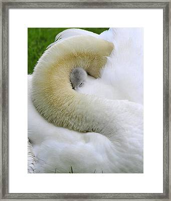 Framed Print featuring the photograph A Mother's Love by Dan Myers