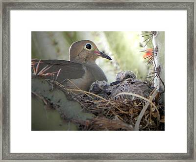 Framed Print featuring the photograph A Mothers' Love by Deb Halloran