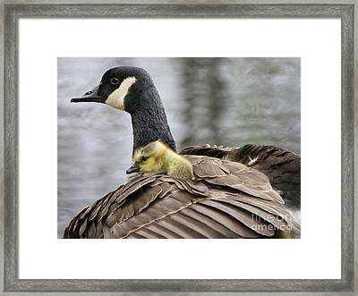 Framed Print featuring the photograph A Mother's Love by Heather King