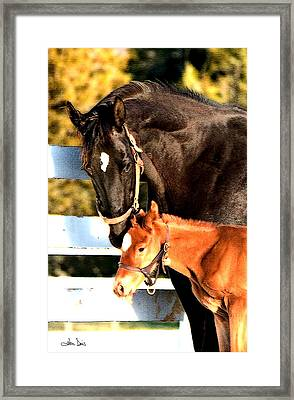 Framed Print featuring the photograph A Mother's Love by Joan Davis
