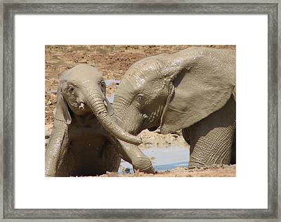 A Mother's Love Framed Print by Ramona Johnston