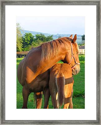 Framed Print featuring the photograph A Mother's Love by Suzanne Oesterling