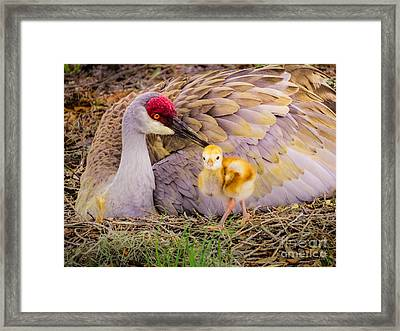A Mother's Lovely Touch Framed Print