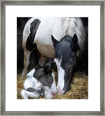 A Mother's Way Framed Print by Carol Cavalaris