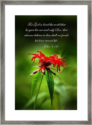 A Mountain Flower  John 3 16 Framed Print by Randall Branham