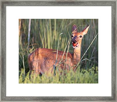 A Mouth Full Framed Print