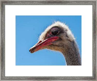 A Mug Only A Mother Could Love. Framed Print