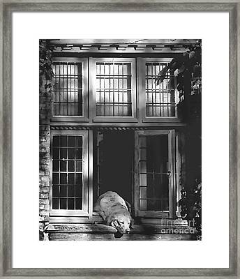 A Nap In The Sun Bw Framed Print