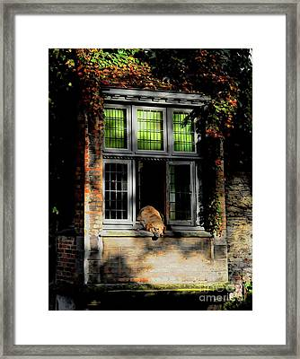 A Nap In The Sun Framed Print