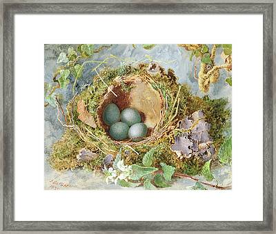 A Nest Of Eggs, 1871 Framed Print