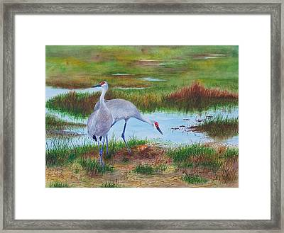 A New Arrival Framed Print