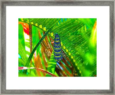 A New Beginning Framed Print by David Lee Thompson
