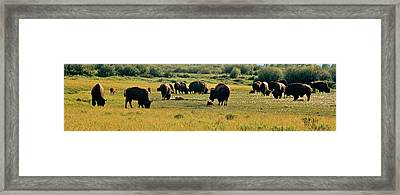 A New Beginning Grand Teton National Park Framed Print