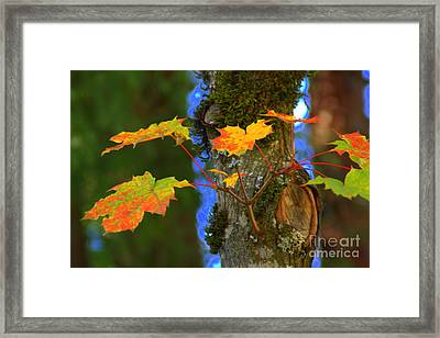 A New Branch Framed Print