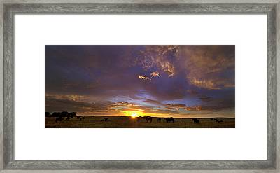 A New Dawn  Framed Print by Steven Reed