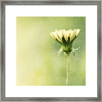 A New Day Framed Print by Carolyn Cochrane
