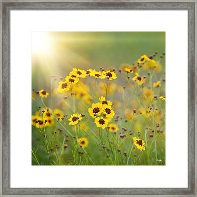 A New Day Framed Print by Scott Pellegrin