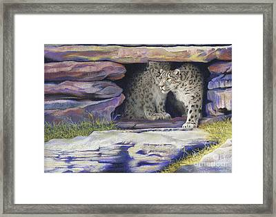 A New Day - Snow Leopards Framed Print by Tracy L Teeter