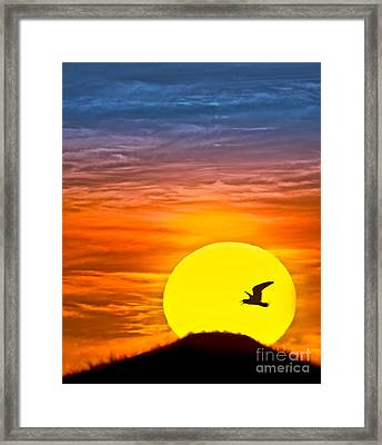 A New Day Framed Print by Susan Candelario