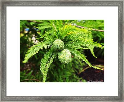 Framed Print featuring the photograph A New Generation by Deborah Fay