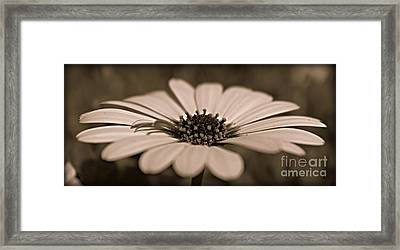 A New Life Framed Print