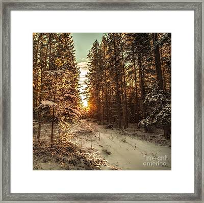 A New Path In Your Life Framed Print