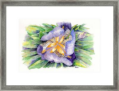 A New Perspective Framed Print by Catherine Bede