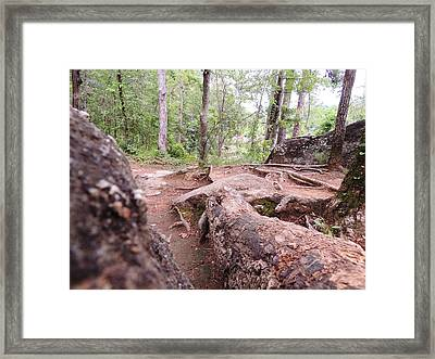 A New View From The Woods Framed Print by Aaron Martens