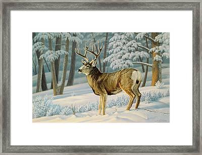 A Nice Buck Framed Print by Paul Krapf