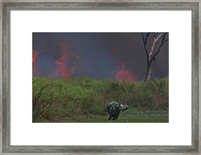 A One-horned Rhinoceros Meanders Framed Print