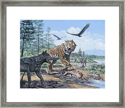 A Pack Of Canis Dirus Wolves Approach Framed Print by Mark Hallett