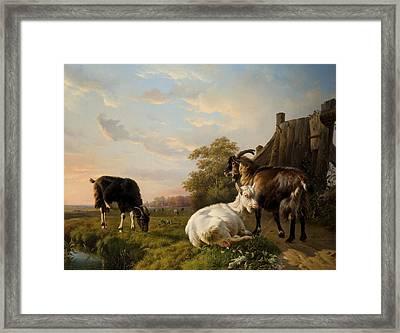 A Pack Of Goats Framed Print by Jacques Raymond Brascassat