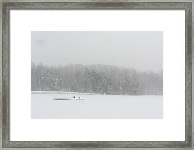 A Pair Of Canada Geese On A Snow Framed Print by Stephen Alvarez