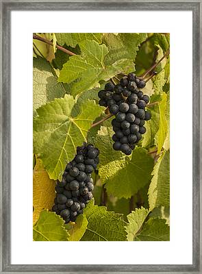 A Pair Of Clusters Framed Print