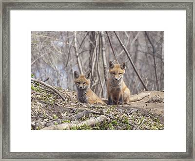 A Pair Of Cute Kit Foxes 3 Framed Print
