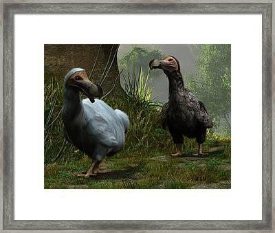 A Pair Of Dodos Framed Print