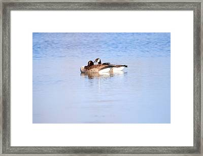 A Pair Of Geese Framed Print by Valarie Davis