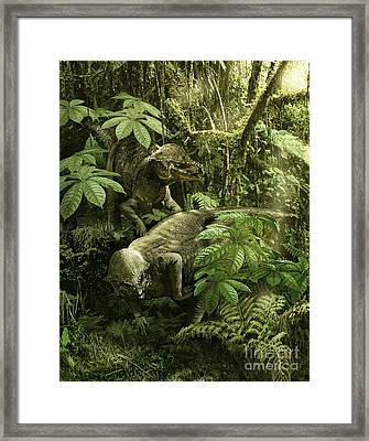 A Pair Of Prenocephale Foraging On Seed Framed Print by Jan Sovak
