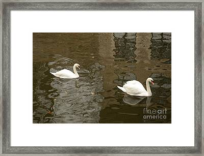 Framed Print featuring the photograph A Pair Of Swans Bruges Belgium by Imran Ahmed