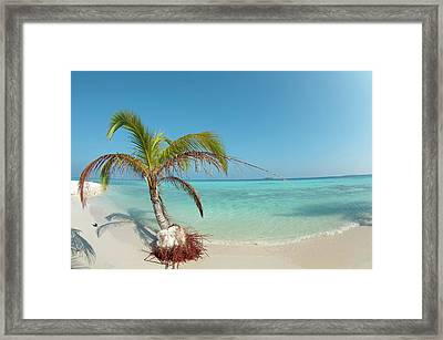 A Palm Tree Being Slowly Washed Away Framed Print