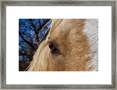 A Palomino's Eye. Framed Print
