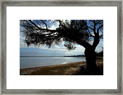 A Park With Tranquil Moments Framed Print by Debra Forand