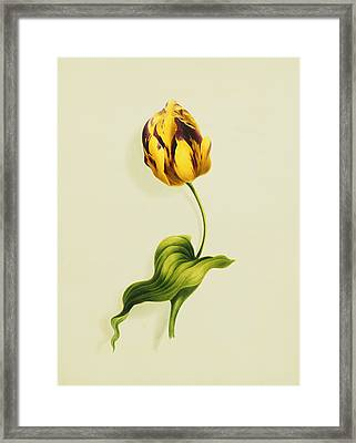 A Parrot Tulip Framed Print by James Holland