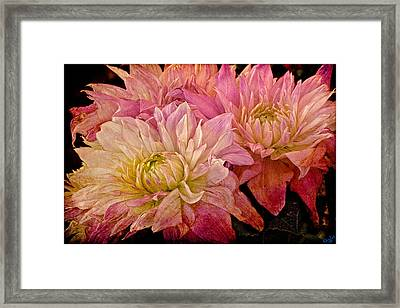 A Pastel Bouquet Framed Print by Chris Lord