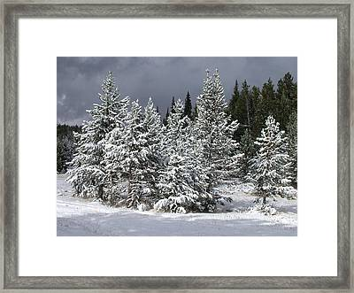 A Patch Of Sun Framed Print by Shane Bechler