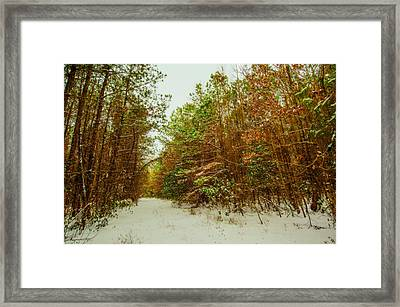 A Path In Winter  Framed Print