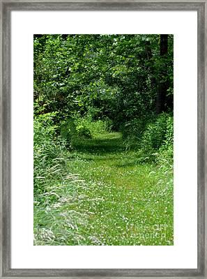 A Path Of Clover Framed Print by Eva Thomas