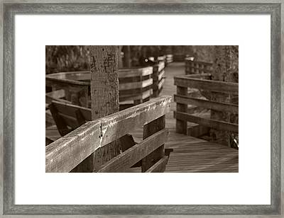 Framed Print featuring the photograph A Path Through The Wetlands by Daniel Woodrum